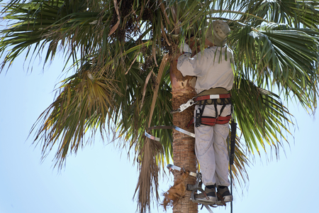 high up: cutting palm tree fronds,high up
