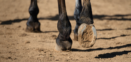 Detailed view of horse hoof foot outside stables,view from behind Archivio Fotografico