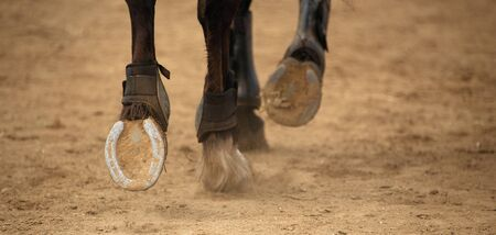 The horse runs on the sandy road the detail of the hooves
