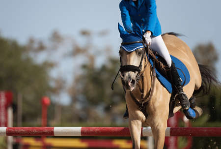Sport horse jumping over a barrier on an obstacle
