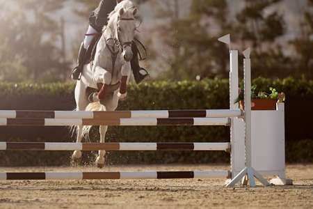 Sport horse jumping over a barrier on an obstacle course