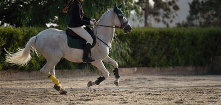 The horsewoman on a white horse, equestrianism. Horse racing