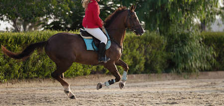 The horsewoman on a brown horse, equestrianism. Horse racing