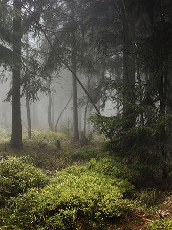 terribly:  Autumn mist