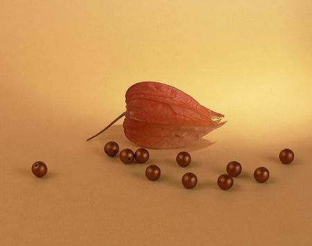 bn: Flor seca (capa gooseberry millones) y bolas de derramar sobre fondo naranja
