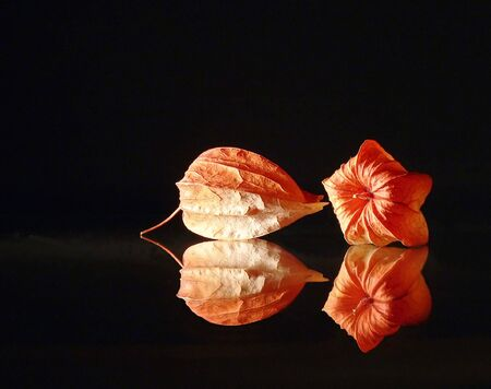 bn: Dry flowers (b.n. cape gooseberry) on a reflective black background Stock Photo