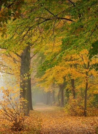 Autumn in a park photo