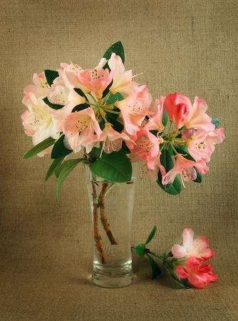 Pink Rhododendrons in a  glass vase photo