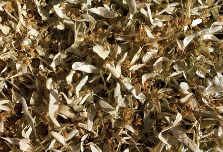 tilo: Dry linden flowers pile. Natural medical ingredients