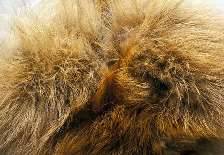 Fox fur texture. Background and textures.