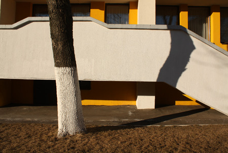 concrete commercial block: Tree and itsshadow in front of residentialbuilding. Urban background.