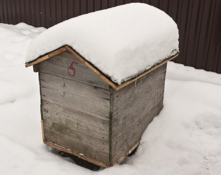 apiary: Bee hive in snow. Live of an apiary