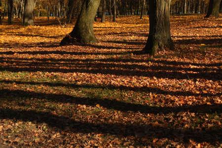spreaded: Old park in autumn. Seasonal background.