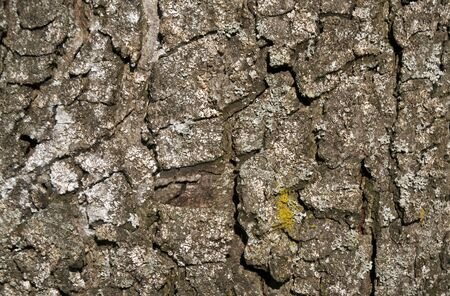 aging: Color tree bark texture. Abstract natural background and texture for design. Stock Photo