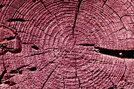 annual ring annual ring: pink toned old tree cut texture. Abstract background and texture for design. Stock Photo