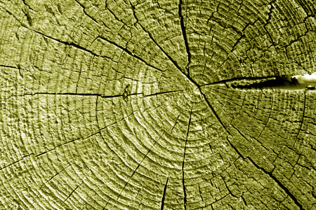 Old log cut macro in yellow tone. Abstract background and texture for design.