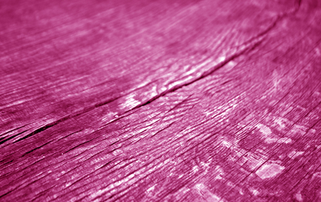 Old log cut macro in pink tone. Abstract background and texture for design.