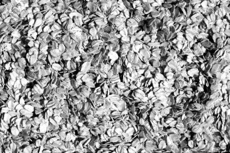 Pile of oatmeal close-up  in black and white. Food and ingrediens.