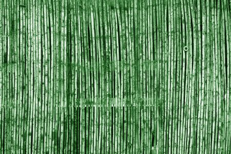 Weathered bamboo fence in green tone. Abstract background and texture for design.