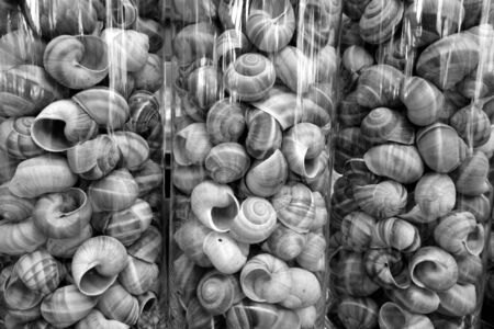 Sea shells in glass vases. Natural texture and background.