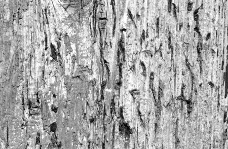 Grunge weathered wooden plank surface in black and white. Abstract background and texture for design. Stock fotó