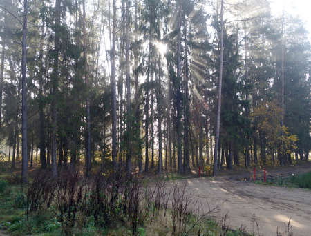 Morning in foggy forest. Seasonal natural wild background