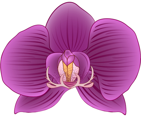 indoor bud: Isolated Bud of an Orchid Illustration