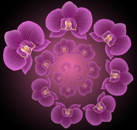 dna spiral: Relaxing the spiral of flower Orchid, Phalaenopsis