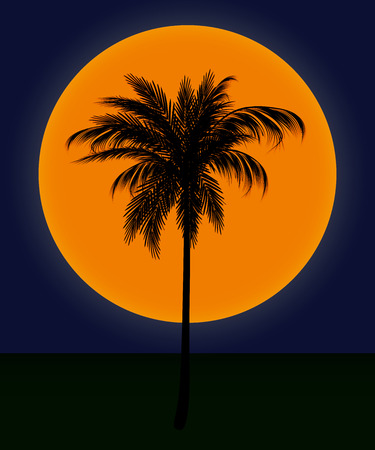 evening landscape. silhouette of palm trees against the sun in the dark blue sky