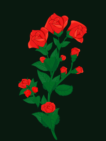 Branch bushy roses dotted with small and big buds of red roses. For cards, greetings and decorations. Illustration