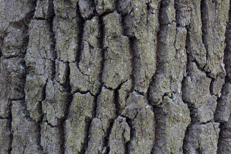 grooves: tree bark wood abstract texture with grooves Stock Photo