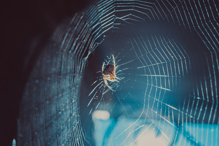 extreme close-up shot of spider web cobweb and flying in light rays particles of dust in sunlight. fly trap Stock Photo