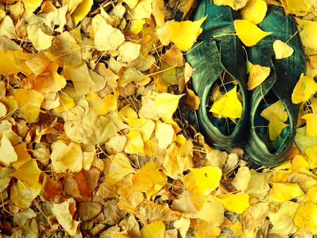 pair of old black shabby worn shoes in fallen yellow leaves foliage on a ground. autumn vibes oldness concept