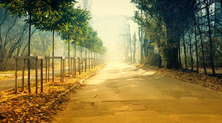 mystic mourning city landscape foggy alley empty road. trees grow on both sides of street Stockfoto