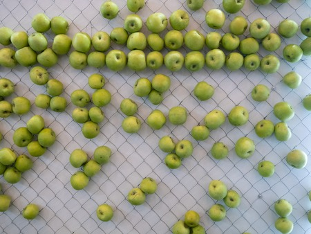 green apples hanging on wall net. modern design solution for creative kitchen zone Imagens