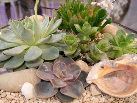 closeup of different succulents waterless plants in glass flowerpot Imagens - 121241043