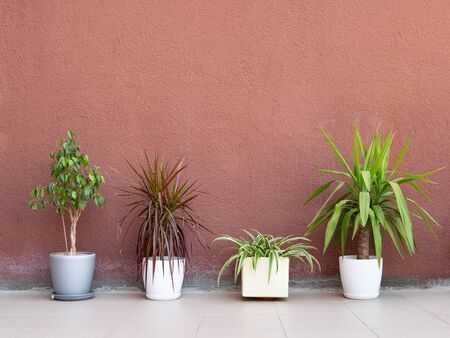 few flower pots with exotic plants on a ceramic tile floor near painted concrete rough wall. interior design mockup with lot of free copy space.