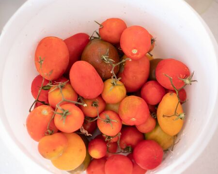 big bowl bucket of fresh organic tomatoes pink, red and yellow colors. close-up view from top. Imagens