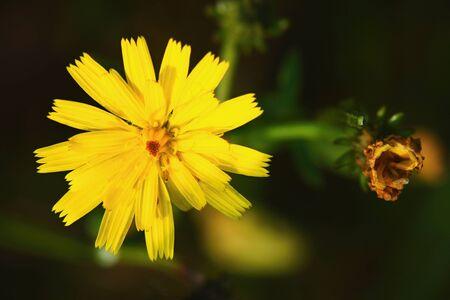 Beauty of autumn meadow. Imagens - 87540547