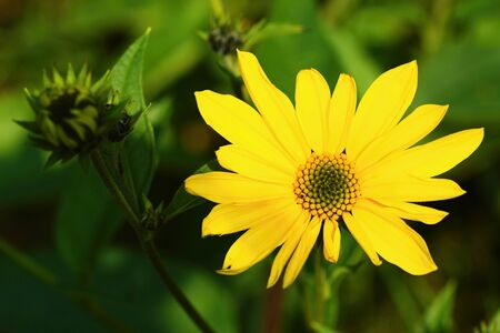 Beauty of autumn meadow. Imagens - 87540668