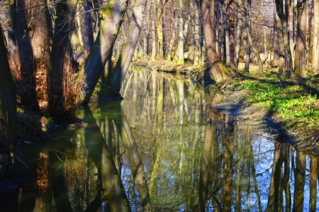 Spring in the floodplain forest.