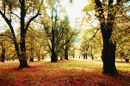 Autumn mood in the park. Imagens - 131004205