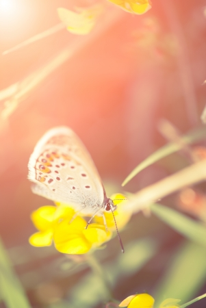 Butterfly resting on Spring flower photo