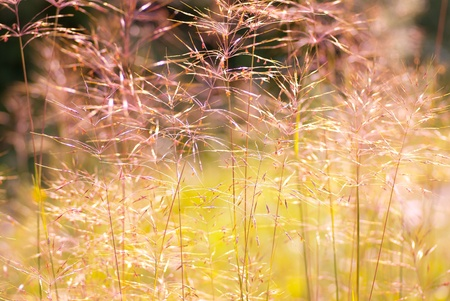Beautiful summer grass with shallow depth of field Stock Photo - 18081361