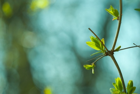 beech tree beech: Spring green forest with lush foliage Stock Photo