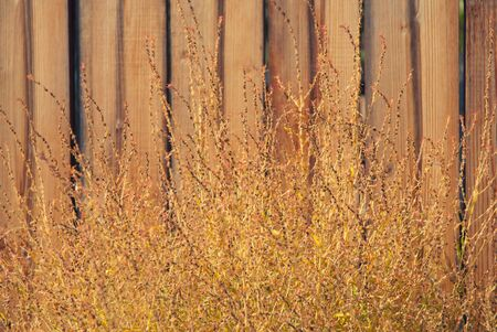 Autumn grass with wooden fence photo