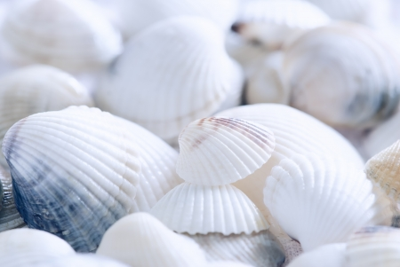 Seashell background  photo