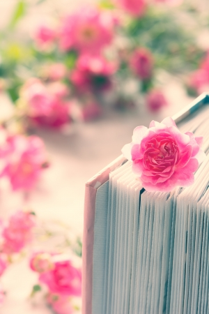 Pink rose and book with roses in the background