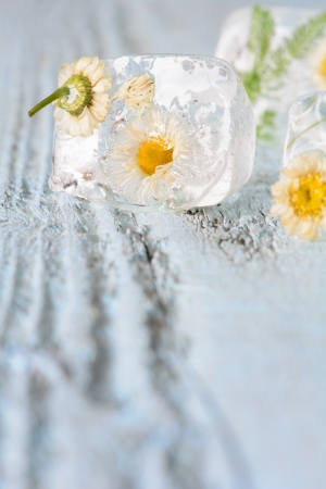 Ice cube with frozen flowers