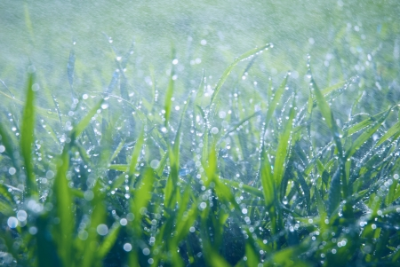 Water drops falling on lush green grass with shallow depth of field photo